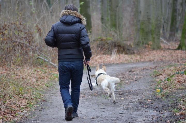 Imagen - Cómo usar Internet para encontrar animales perdidos