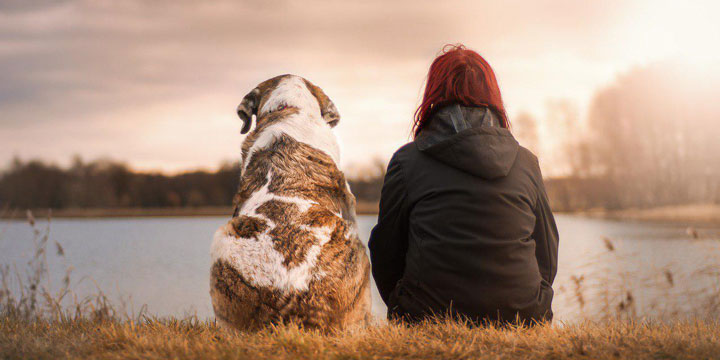 usar-internet-encontrar-buscar-animales-perdidos-720x360