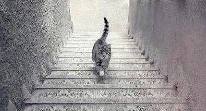 Imagen - 20 mejores ilusiones ópticas de todo Internet