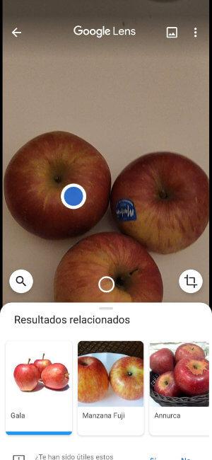 Imagen - Todas las funciones de Google Lens