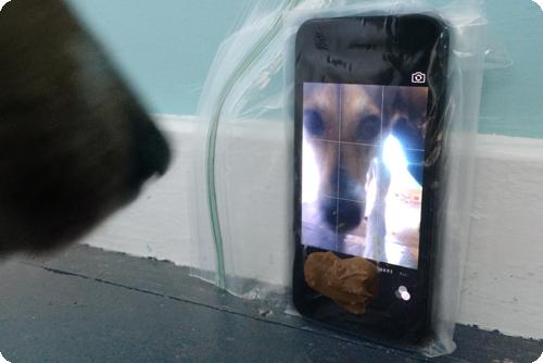 Imagen - Cómo enseñar a tu perro a tomar una selfie