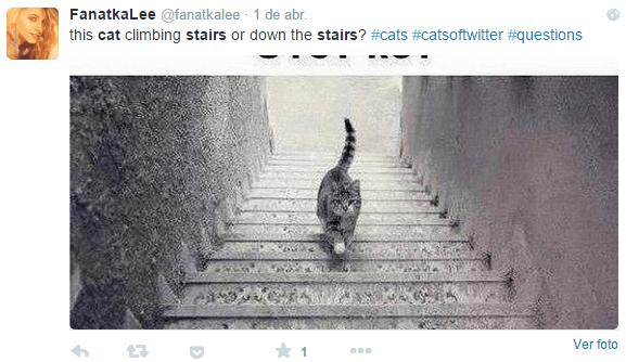 Imagen - El nuevo viral tras #TheDress: ¿El gato sube o baja las escaleras?