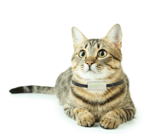 Imagen - Weenect Cats, llama a tu gato cuando se escape