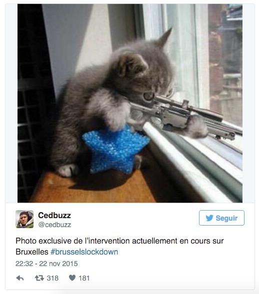 Imagen - ¿Qué significan los gatos de Twitter?