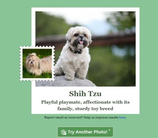 Imagen - What-dog.net, la app y web de Microsoft para identificar a tu perro
