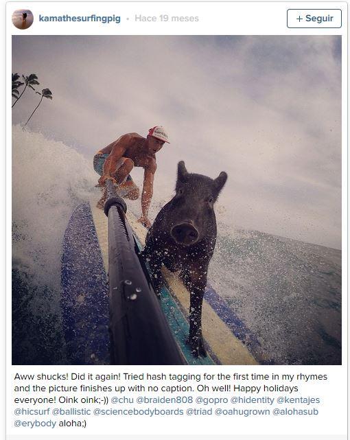 Imagen - Kama, el cerdo surfista que triunfa en Internet