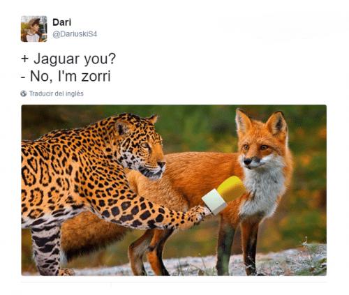Imagen - Entrevistas a animales, los nuevos memes virales que circulan por redes sociales