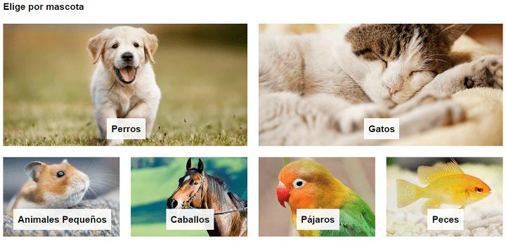 Imagen - Amazon Mascotas, la nueva sección para animales domésticos