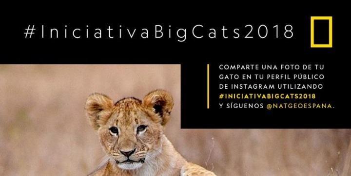 Imagen - Iniciativa Big Cats 2018, fotos de gatos en Instagram para salvar a los grandes felinos