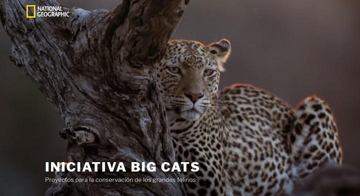 Iniciativa Big Cats 2018, fotos de gatos en Instagram para salvar a los grandes felinos