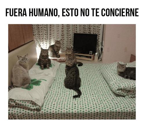 Imagen - 16 imágenes y GIFs de gatos para celebrar el Día Internacional del Gato