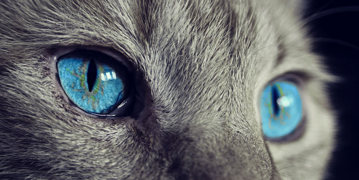 16 imágenes y GIFs de gatos para celebrar el Día Internacional del Gato