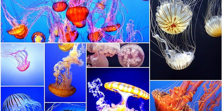 Cómo saber si hay medusas en la playa desde tu smartphone