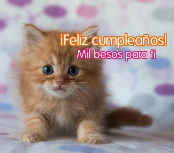 Imagen - 16 felicitaciones de cumpleaños graciosas para WhatsApp