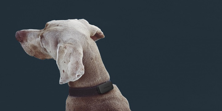 Invoxia Pet Tracker, el dispositivo con GPS para monitorizar la actividad de tus mascotas