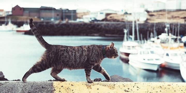 Imagen - Invoxia Pet Tracker, el dispositivo con GPS para monitorizar la actividad de tus mascotas