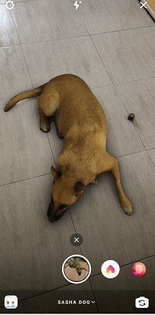 Imagen - Sasha Dog, el filtro que añade un perro realista en las Instagram Stories