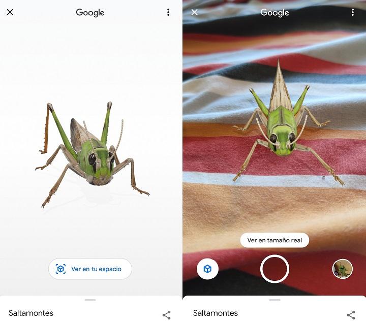 Imagen - Cómo ver insectos en 3D con Google