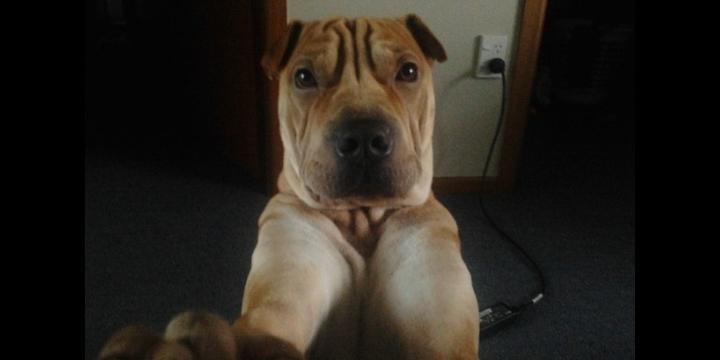 Cómo enseñar a tu perro a tomar una selfie