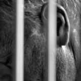 Organizar protestas en redes sociales será castigado por el Código Penal