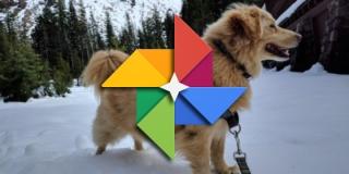 Google Fotos ya agrupa las fotos de nuestras mascotas y permite buscarlas por su nombre