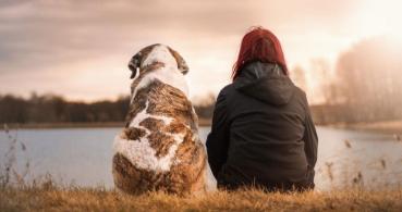 Cómo usar Internet para encontrar animales perdidos