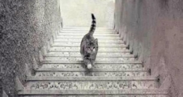 El nuevo viral tras #TheDress: ¿El gato sube o baja las escaleras?