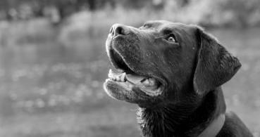 Tindog, el Tinder para los dueños de perros