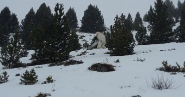 El Yeti de Formigal, el nuevo viral