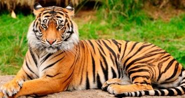 Tinder prohíbe los selfies con tigres