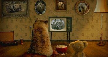 """""""¿De qué color es el oso?"""", el nuevo viral de Instagram"""