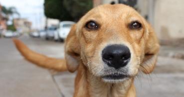 La app AlertCops ya permite denunciar el maltrato animal