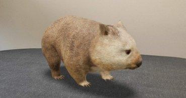 Google añade nuevos animales 3D: quokkas, koalas y canguros