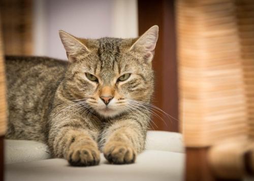 cat-domestic-720x479
