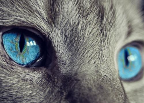 imagenes-dia-internacional-gato-720x362