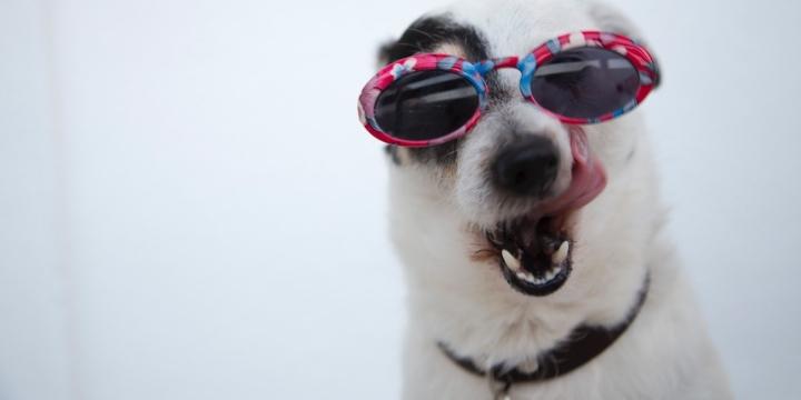 foto-perro-gafas-1300x650