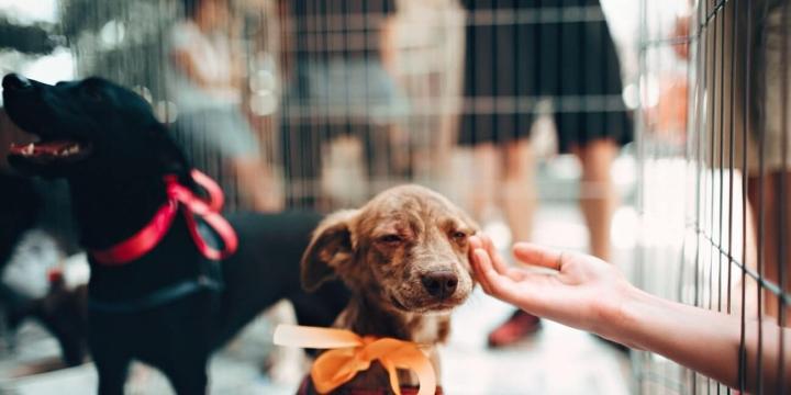 perro-adopcion-1300x650