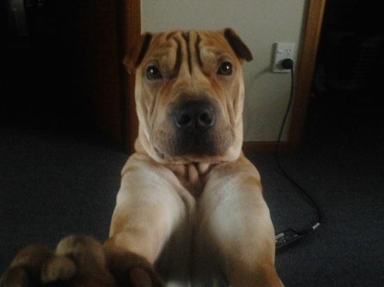 dog-selfie-280614