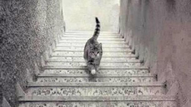 gato-twitter-2-090415