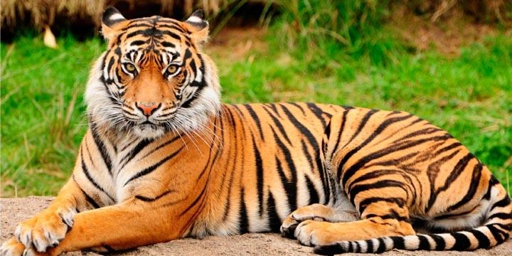 tinder-prohibe-los-selfies-con-tigres-720x360