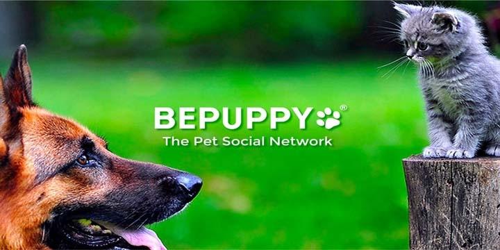 bepuppy-720x360