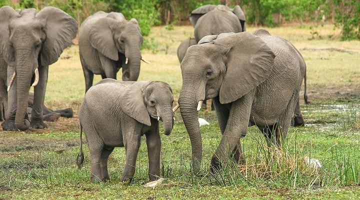 elefantes-720x400