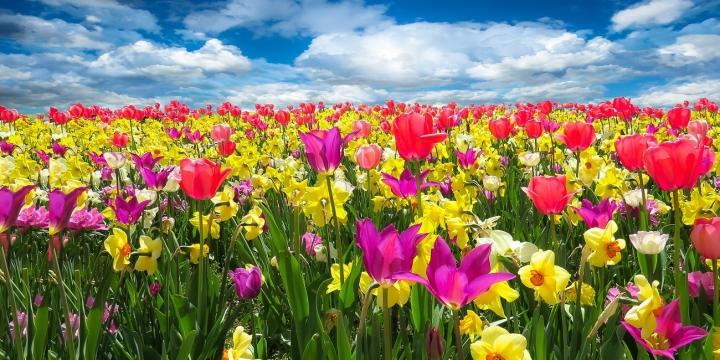 flores-campo-cielo-1300x650