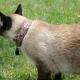 Hackea el WiFi del vecino con un gato