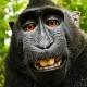 Wikipedia se niega a retirar el selfie del mono