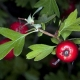 Arbolapp: una nueva aplicación que identifica árboles