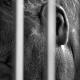 """Un año de cárcel para un usuario de Facebook por """"matar fachas es mi deporte favorito"""""""
