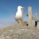 Una gaviota roba una GoPro y graba las islas Cíes