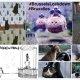 ¿Qué significan los gatos de Twitter?