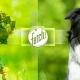 What-dog.net, la app y web de Microsoft para identificar a tu perro